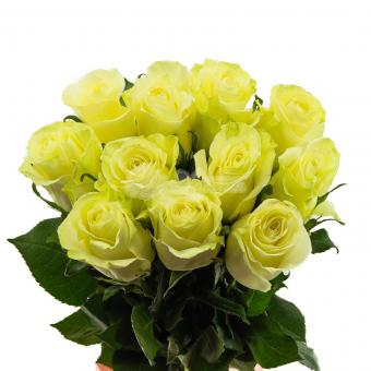 Букет из 11 Эквадорских белоснежных роз