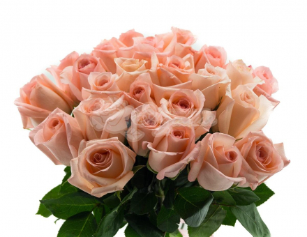 Букет из 25 кремовых роз 40 см