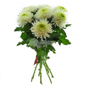 Букет из 7 Крупноголовых хризантем